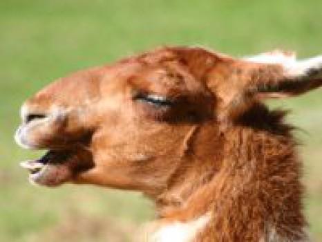 Chistes cortos de animales para niños, se reirán a carcajadas