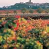 Viajar con niños a… La Rioja