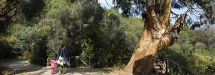 Barcelona con Niños: Parc de l'Oreneta