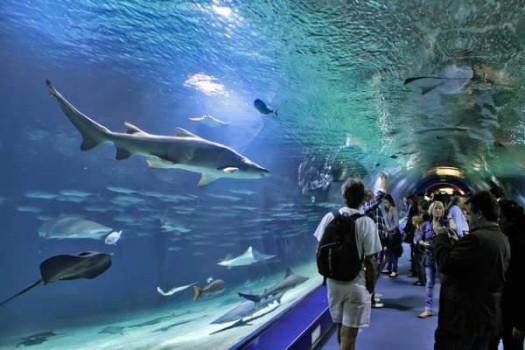 ¿Visitamos los mejores acuarios de Europa?