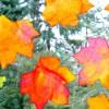 5 manualidades para niños con hojas de otoño