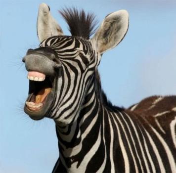 50 chistes cortos para niños, ¡para troncharse de risa!
