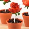 Recetas dulces, cómo hacer rosas de fresas