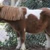 Montar a caballo, ¡clases de hípica en Barcelona!