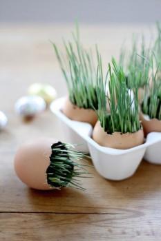 Experimentos caseros, plantas en cáscaras de huevo