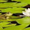 Anfibios, ¿qué animales son?