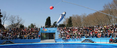 Zoo Barcelona zoo de barcelona pequeocio