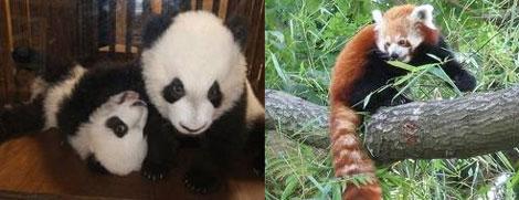 Kung Fu Panda 2, estreno 17 de junio