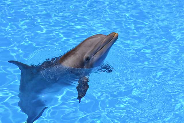 Delfines zoo barcelona