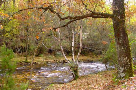 Bosque El Hayedo de Montejo de la Sierra