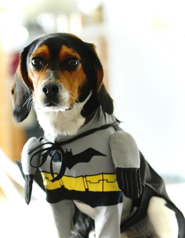 Disfraz de Batman mascotas