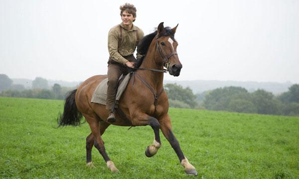 War horse caballo de batalla pelicula