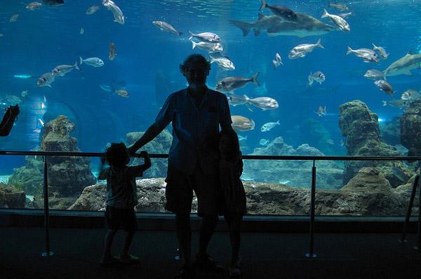 Aquarium de barcelona pequeocio for Aquarium de barcelona