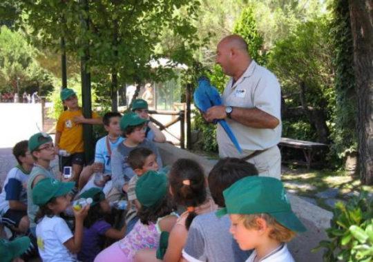 Campamentos de verano en Madrid muy populares 3