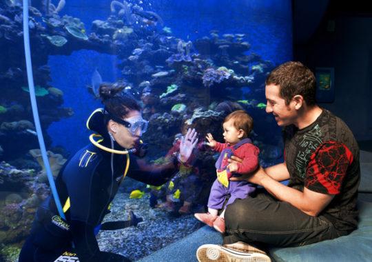 Campus de verano para niños en Palma Aquarium 1