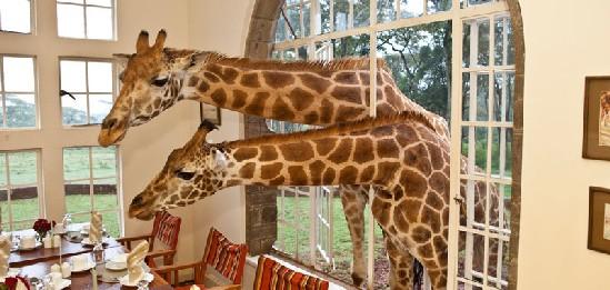 Giraffe manor hotel con jirafas