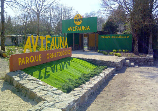 Avifauna, excursión con niños en Lugo
