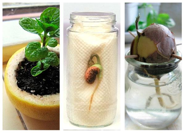 C mo plantar semillas con ni os pequeocio for Como sembrar semillas en macetas
