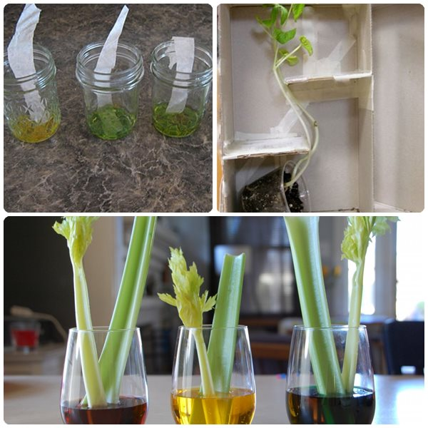 3 experimentos infantiles con plantas - Pequeocio