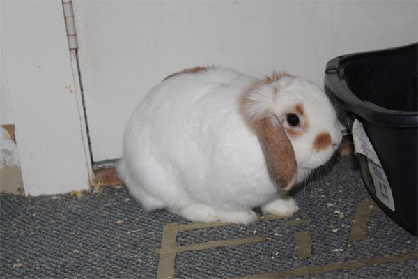 Conejos, mascotas infantiles