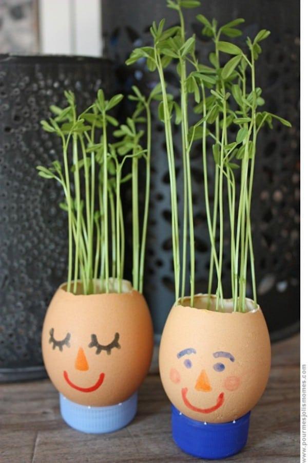 plantas dentro de cáscara de huevo