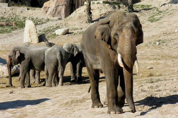 Parque de animales Terra Natura