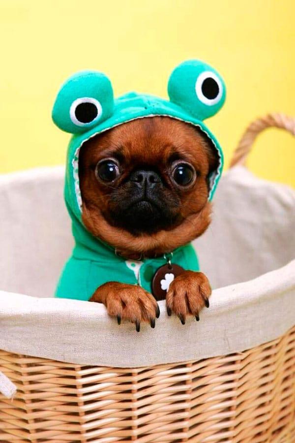disfraz-perrito