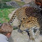 animales en semilibertad