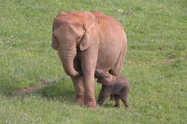 Planes con niños, animales en semilibertad