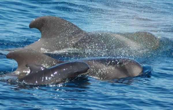 Tenerife con niños: ver ballenas y delfines
