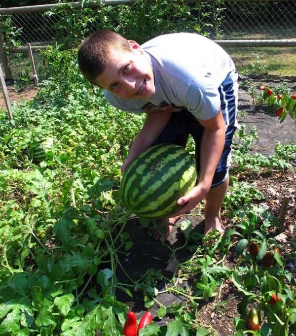 Idea para enseñar a los niños a cuidar el medioambiente