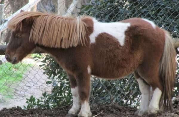 Aprender a montar a caballo en Parc del Castell de l Oreneta, Barcelona