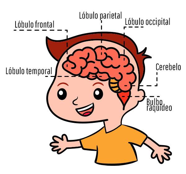 cerebro TDAH