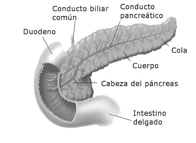 Cómo funciona el aparato digestivo