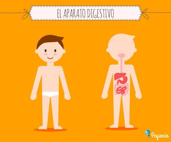 El Aparato Digestivo Pequeociocom