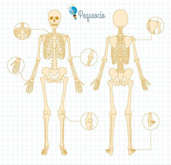 Esqueleto para imprimir