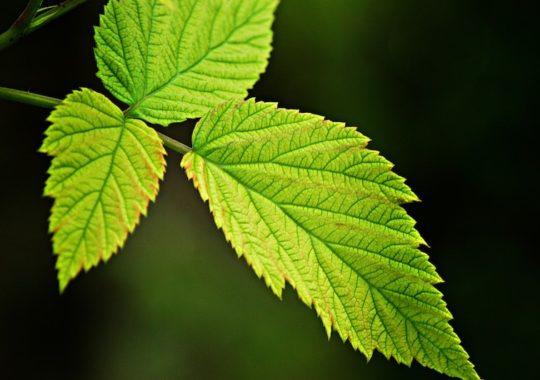 fotosíntesis para niños