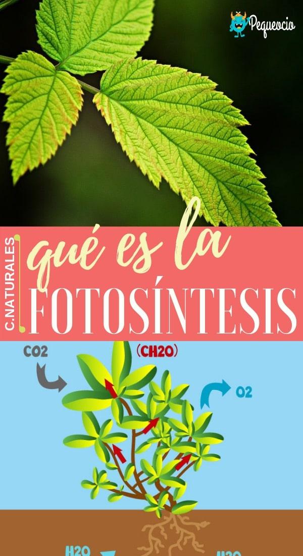 Fotosíntesis para primaria