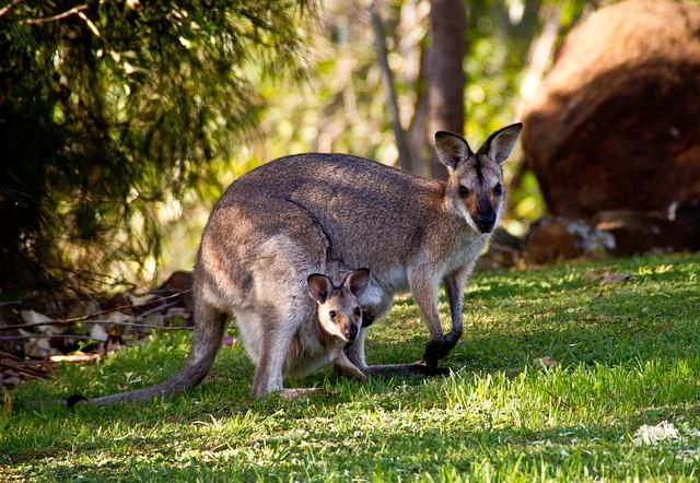 Mamíferos marsupiales