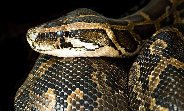 Serpientes reptiles