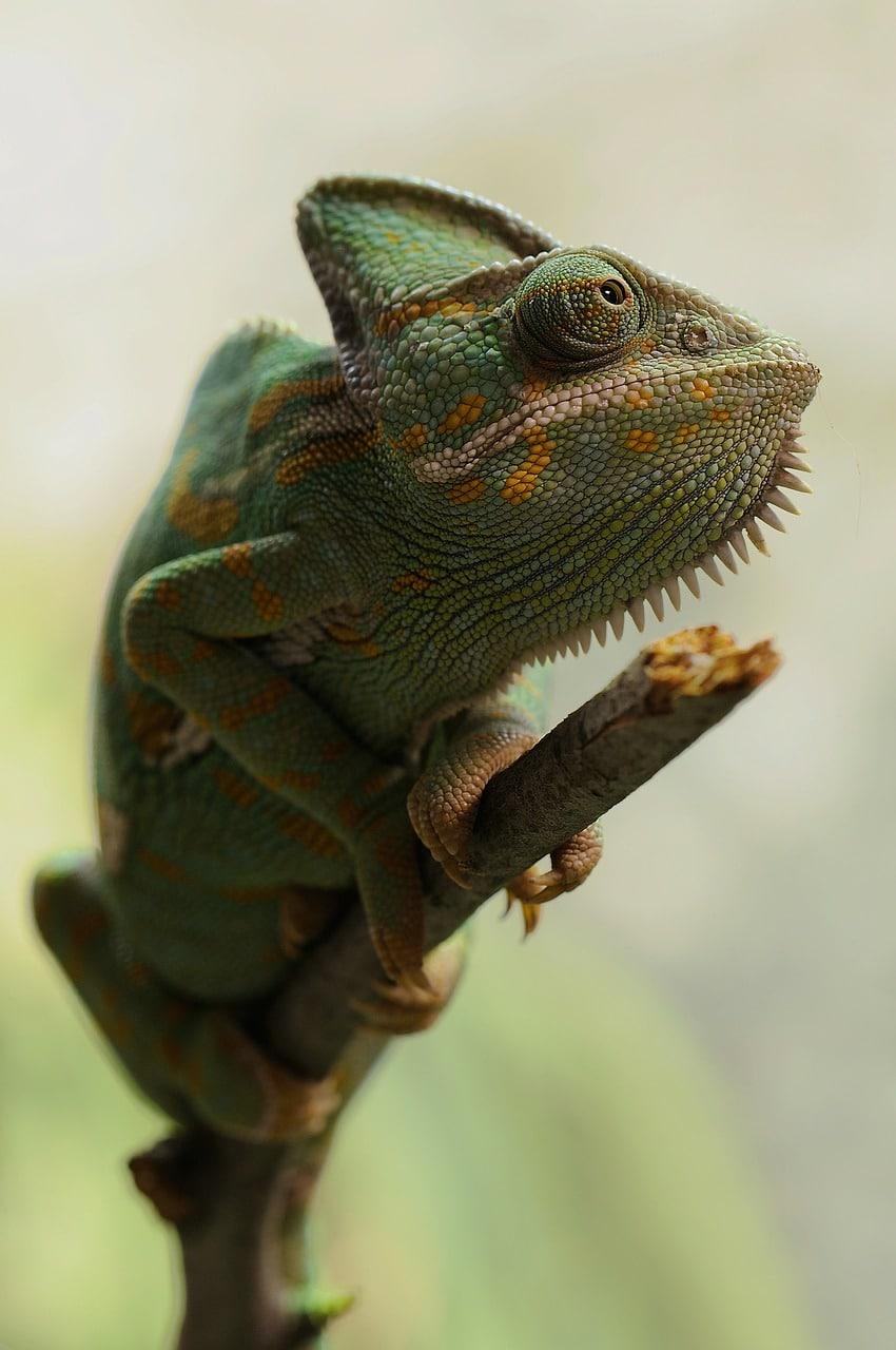 Reptiles explicación para primaria