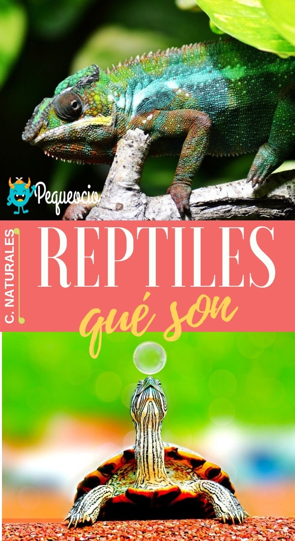Reptiles clases
