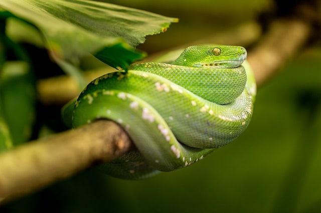 reptiles características
