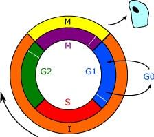 Ciclo de vida de la célula