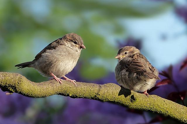 Tipos de pájaros