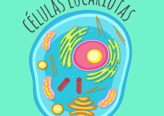 Diferencia entre células eucariotas y procariotas
