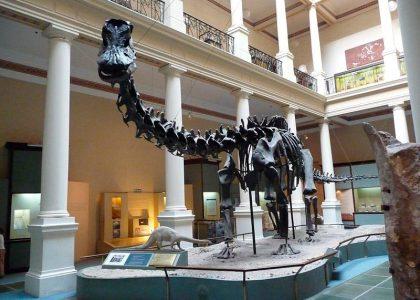 Museo de Ciencias Naturales Madrid