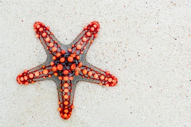 Equinodermo estrella de mar
