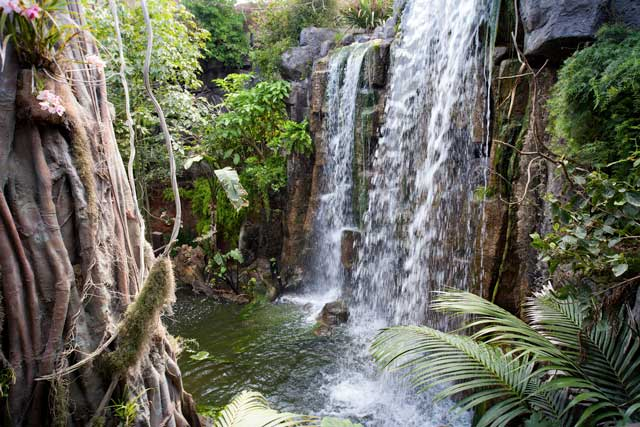 Palma Aquarium la jungla