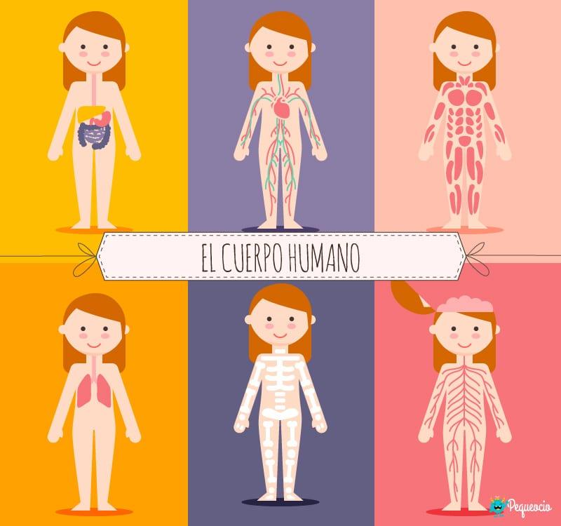 El Cuerpo Humano Y Sus Partes Con Imágenes Para Imprimir
